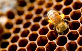 Интересное из жизни пчел