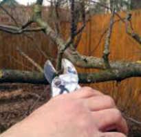 Подробная схема обрезки груши весной