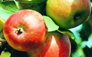 Иммунные сорта яблонь на карликовом подвое