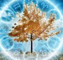 Гороскоп какое дерево принадлежит
