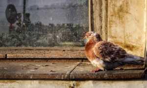 Если птица долбится в окно