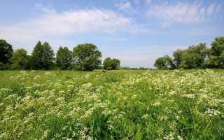 Какие растения в зоне степей