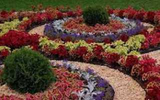 Самые неприхотливые многолетние цветы цветущие всё лето