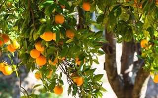 Садовые работы Убираем лишнее вносим недостающее