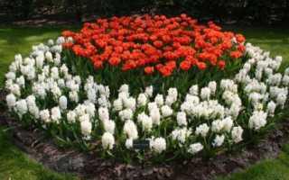 Многолетние цветы без хлопот