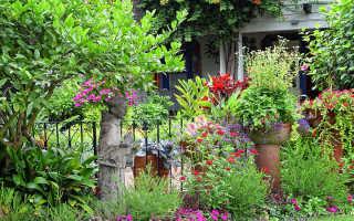 Цветы на даче для ленивых