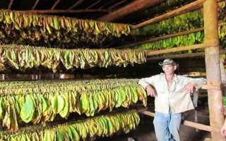 Бизнес на выращивание табака