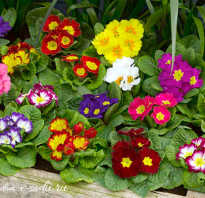 Растения для тенистого сада список