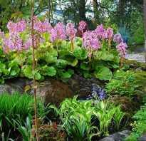 Тенелюбивые растения и цветы для сада