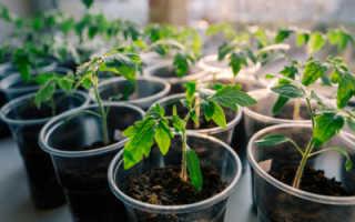 Посадка рассады помидоров как выбрать оптимальные сроки