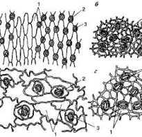 Из каких клеток состоит проводящая ткань