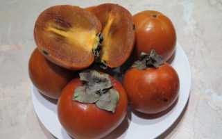 Выращивание хурмы в домашних условиях из косточки